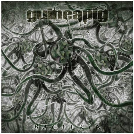 Guineapig - Bacteria - CD