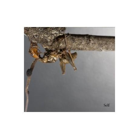 Terzij De Horde - Self - CD-Digi