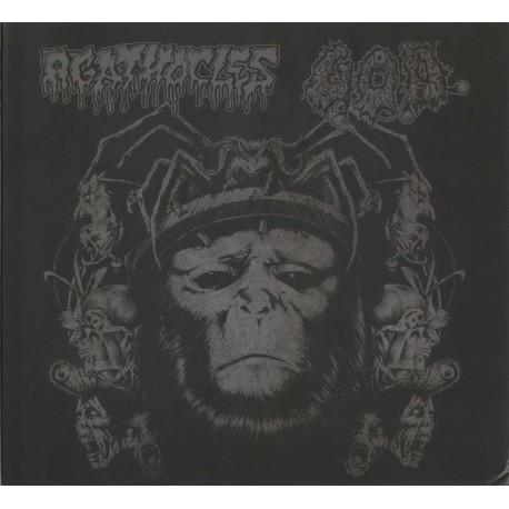 Agathocles / G.O.D. – Split - CD